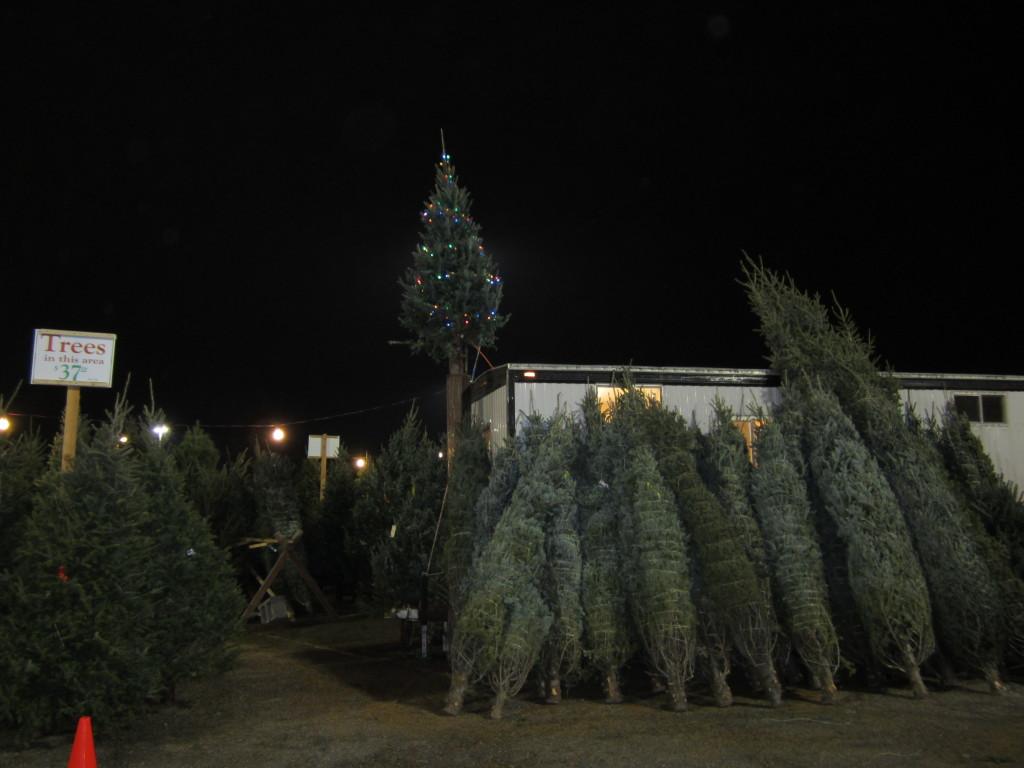 Christmas Trees at Eden Prairie Center – BJ Trees
