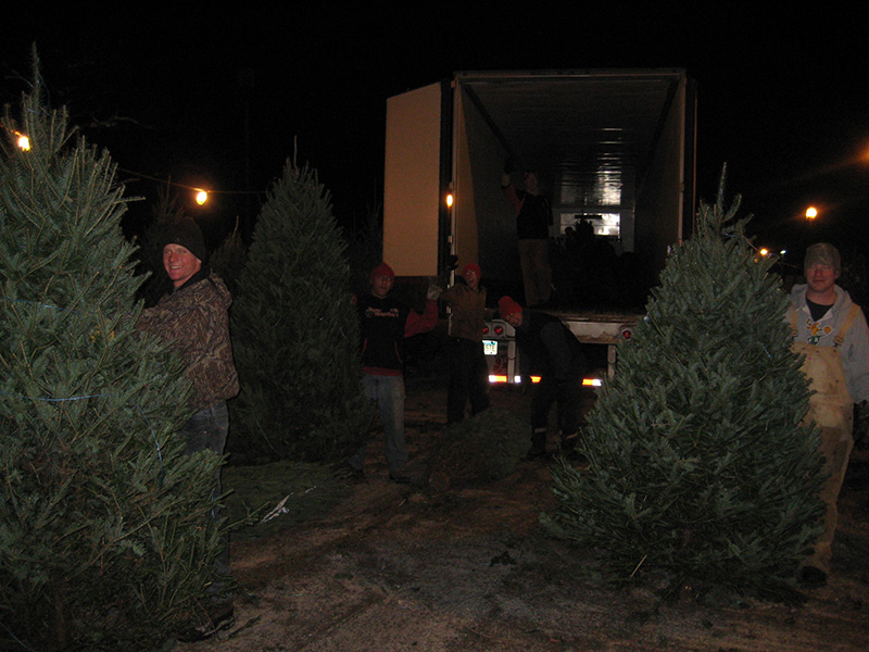 Cut Your Own Christmas Tree Mn Part - 42: Refilling With Fresh Cut Trees
