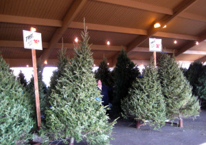 Best christmas tree selection in Minnesota
