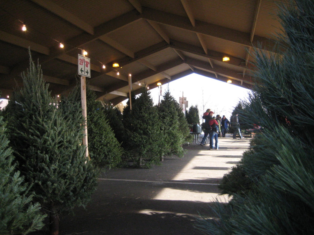 Christmas Tree Farms In Mn